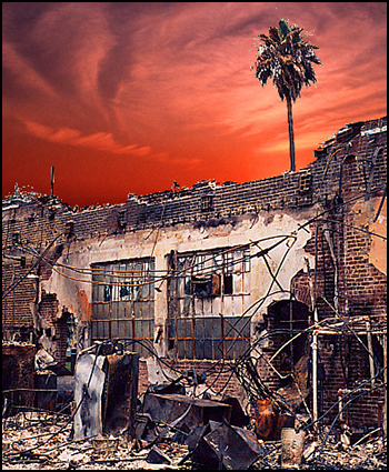 Palm tree & burned out building