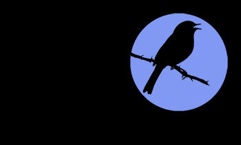 Bird silhouette against moon